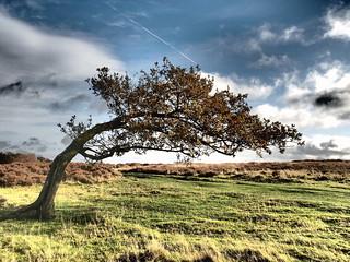 Windy Stanton Moor
