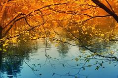 ...October sun (Eggii) Tags: pilica spała river october sun evening sunny autumn tomaszówmazowiecki relax