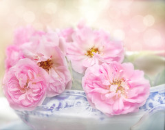 Roses in a grey day. (BirgittaSjostedt) Tags: rose bowl pink soft beauty nature garden pastel macro bokeh card rosecard greetings birgittasjostedt stilllife still flower bouquet magicunicornverybest ie