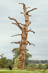 The gnarly tree ... (Jackie L Matthews) Tags: gnarly tree golf bag autumn whittleburyhall