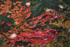 Through the Pond (jasohill) Tags: autumn october color nature reflections iwate red trees 2017 hachimantai forest photography life colors mountains colorful landscape japan fall