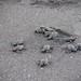 Gira Periodística para conservar a las tortugas marinas