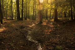 National Park Veluwezoom (H. Bos) Tags: zijpenberg veluwe veluwezoom natuur nature bossen woods nationalpark nationaalpark gelderland autumn herfst