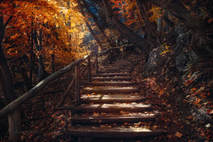 fall up the stairs (cherryspicks (off)) Tags: forest wood tree stairs fence autumn fall leaves light sunshine rocks climb park croatia landscape nature