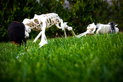 skeletons [Day 3207]