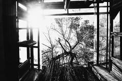 R0023757 (kenny_nhl) Tags: ricoh road grd grdiv grd4 provoke street streetphotography snap shot shadow scene surreal streephotography visual monochrome malaysia 28mm black blackwhite bw blackandwhite tree city light explore explored