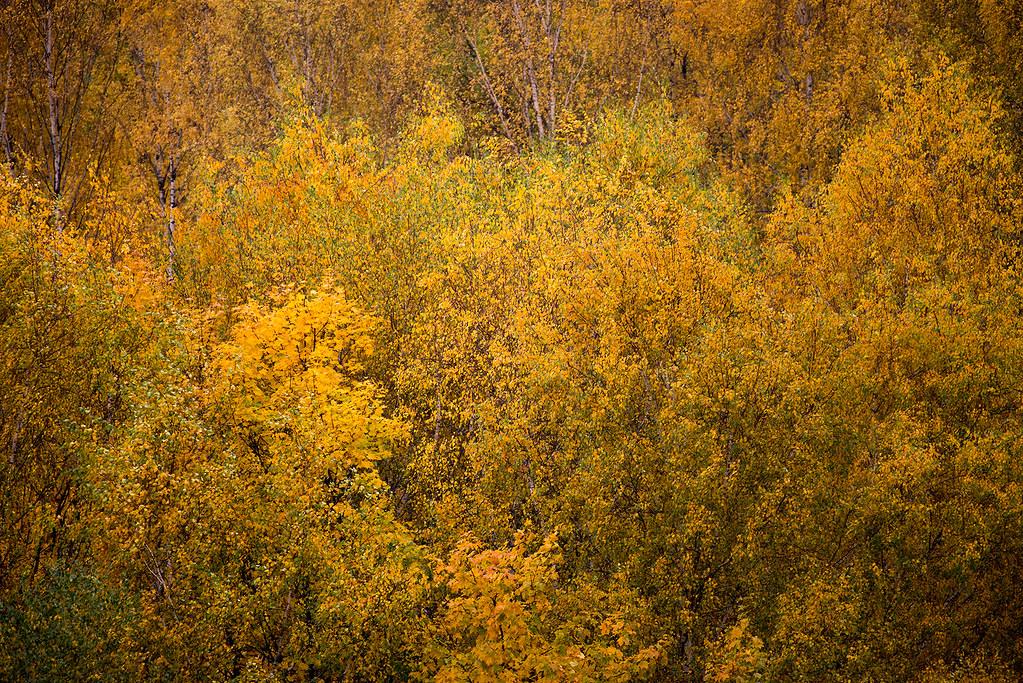 фото: Colours of autumn