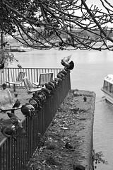 Lübeck 2017 (hudsonleipzig80) Tags: lübeck norden schleswigholstein hansestadt ostsee schiffe schifffahrt schiff hafen boot boat outdoor canon canoneos1200d eos1200d eos 1200d blackwhite bw umwelt umweltschutz