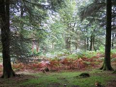 Among The Trees! ('cosmicgirl1960' NEW CANON CAMERA) Tags: trees wood woodland forest green nature devon dartmoor yabbadabbadoo
