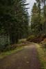 Forest Path (jasty78) Tags: forest path queenelizabethforestpark trossachs aberfoyle highlands scotland nikon d7200 sigma350mmf14