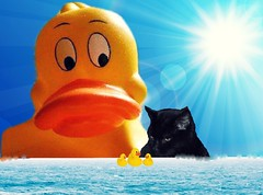 oh oh-Look behind you... (marieschubert1) Tags: rubber ducky cat yellow black sky sun water watch chase protect victum fun bright colorful