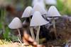 Mushrooms (gripspix (OFF)) Tags: 20171012 constructionarea bauland pilze mushrooms