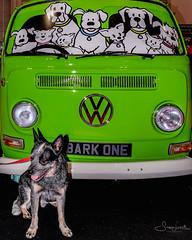 20171021-DSCF3017 Bark One! (susi luard 2012) Tags: e16 esslinger rupert vw bark campervan dog excel gateway london one uk western