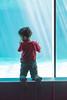 4Y4A0788 (francois f swanepoel) Tags: carcharodoncarcharias akwarium aquarium bigwhite capetown greatwhiteshark grootwithaai haai inquisitive kaapstad museum nuuskierig shark waterfront weskaap westerncape marine conservation