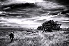 The Trees Will Stand like Pleading Hands (Novowyr (very slow)) Tags: dunes hatainville capdecarteret normandie france nature landscape landschaft natur trees windshaped sky wideness weite himmel windgeformt windswept blackwhite