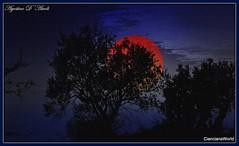 Notti magiche - Ottobre-2017 (agostinodascoli) Tags: nikon nikkor cianciana sicilia agostinodascoli texture nature luna photoshop photopainting art digitalart digitalpainting alberi cielo sky