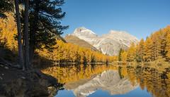 "Palpuognasee ""Lai da Palpuogna"" (FRAMA-Photo) Tags: landschaft landscape schweiz swiss natur nature herbst herbstlich bunt berg berge mountains fall sunny sonnig autumn engadin lake see palpuognasee laidapalpuogna albula albulapass d800 d800e nikon sigma35mmf14dghsm sigma35mmf14dghsmart sigma 35mm f14dghsm lärche larixdecidua"