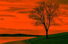 Observer. (hajavitolak) Tags: sunset atardecer arbol pantano swamp embalse pantanodeullibarigamboa ullibarrigamboa alava araba countrybasque color sinespejo sony mirrorles evil ilce6000 a6000 orange manuallens