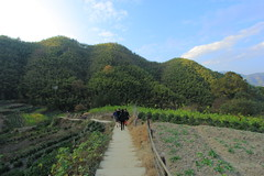 Rural China Preserved - vol.2 (Eye of Brice Retailleau) Tags: angle beauty composition landscape nature outdoor panorama paysage perspective scenery scenic view extérieur ciel blue sky montagne path chemin camino hill people sunny countryside fields stairs bamboo asia china chine mukeng