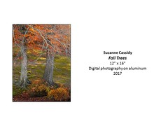 """Fall Trees • <a style=""""font-size:0.8em;"""" href=""""https://www.flickr.com/photos/124378531@N04/37776295531/"""" target=""""_blank"""">View on Flickr</a>"""