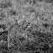 Mara Safari-2079.jpg