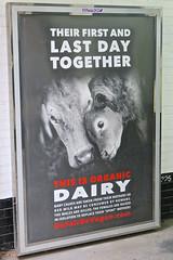 Organic Dairy, New York, NY (Robby Virus) Tags: newyorkcity newyork nyc ny manhattan bigapple city vegan veganism organic dairy poster ad advertisement inhumane