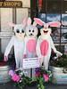 Hey Everybunny! in Petaluma, California. (Suitable 4 Framin') Tags: bunnies hare rabbits petaluma california cali ca sonomacounty