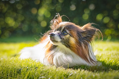 Whoever said you can't buy happiness forgot little puppies (Ranveig Marie Photography) Tags: ranveignesse ranveigmarienesse photography photographs images pics photos pictures bilder nikon