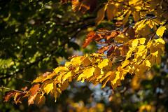 Chablisien - 18 octobre 2017 --77 (bebopeloula) Tags: photorobertcrosnier 2017 89 bourgogne chablisien europe france nikond700 yonne automne