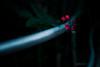 steel and flowers (N.sino) Tags: m9 summilux50mm tropicalflower greenhouse pink 南国の花 手すり 温室 神代植物公園