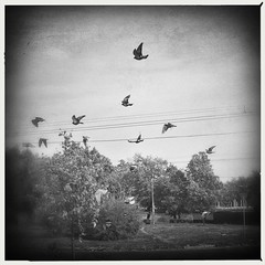 •Birds flying in the morning sky {bnw} 🌌🐦 (sergiochubby) Tags: squaregraph squaregraphy light cloud bird geometry clouds mobiography beauty minimalism hipstadreamers hipstamaticmagic inexplore onlymobileart onlymobile iphoneonly nostalgia hipsta ukraine mobileart hipstamagic phoneographic hipstsmatic kharkiv visualukraine iphoneography vintage elements artistic canvas landscape melancholy nature tree naturelovers skyscape photoukraine serene skyporn sky urban skypainters foliage urbansky urbanlook dawn autumn hipstamatic dramatic urbanscape city dreamy mood tranquility outdoor plant warm cityscape skyline ukrainian urbanexploration lines highwire wire post cute abstract dove wings monochrome blackandwhite bnw awesomebnw
