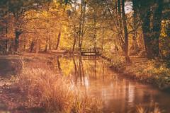 Silence / Ruhe (drummerwinger) Tags: rot canon80d englischergarten münchen herbst laub autumn blätter leaves bach sigma lightroom