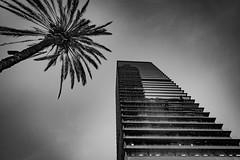 Barcelone (guillaumejulien35) Tags: wideangle palmier eos5d canon city building urban architecture barcelone barcelona espagne catalogne noiretblanc blackwhite
