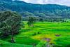 bhor17 (1 of 1) (rolixir) Tags: bhor greenary landscape natgeo