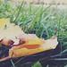 giallo autunno