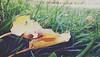 giallo autunno (e_lisewin) Tags: ravenna parco parcoteodorico 2017 autunno fall autumn giallo yellow leaf leaves foglie camminare correre corsa run running nature aperto spazio paesggio landscape natura città city emiliaromagna romagna domenica sunday dimanche silenzio solitude solitudine ascoltare osservare esplorazioni