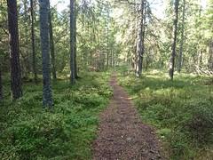 Åsermarka_0222 (mtbboy1993) Tags: singletrack sti trail forest natur nature skog mark marka askim østfold norge norway