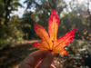 Autumn leaf in woodland (shaftina©tion) Tags: autumn fall autmn autumnal brown colorfulcolourful dead decay deceased golden leaf leafy leaves orange orrange red rich trees vibrant vivid wood wooded woodland woodlands woods