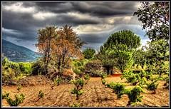 Colores otoñales después de la cosecha (Jose Roldan Garcia) Tags: ávila árboles viñedos colores cielo nubes natural tiétar agricultura paisaje piedras montaña otoñal