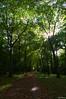 Follow the light (Vak Photos) Tags: nature trees path autumn leaves automne arbres chemin feuilles d3100 sun light