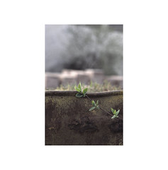Rebel plant.   ( Burlada ) (José Luis Cosme Giral) Tags: rebelplant urbannature minimalism plant nikon scanned burlada navarra 2000