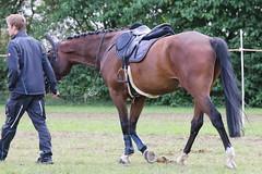 _MG_5874 (dreiwn) Tags: ridingarena reitturnier reiten reitplatz reitverein reitsport ridingclub equestrian showjumping springreiten horse horseback horseriding horseshow pferdesport pferd pony pferde tamronsp70200f28divcusd