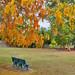 Have a seat under the orange petals shower
