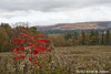 The field at Arrowhead, Herman Melville's home for 12 years (A.Maltese) Tags: sumac tree autumn fall arrowhead pittsfieldma landscape mountain field outdoor