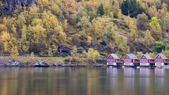 Autumn color in Flåm (HansPermana) Tags: norway norwegen norge nordic scandinavia skandinavien flåm fjord water reflection autumn herbst trees huts houses