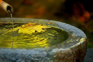 Leaf in Fountain 4701 B