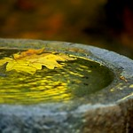 Leaf in Fountain 4701 B thumbnail