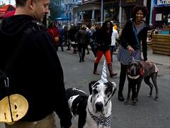 Kensington Market (- Jacques) Tags: toronto street kensington dogs people lx5