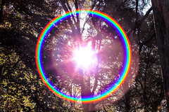 the never ending rainbow in the forest of light (I was blind now I see!) Tags: rainbow rainbows forest trees sun sunlight sunburst light shadows leaves halo