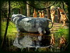 Thank you, from The Management. (nelhiebelv) Tags: cavemen hunters hunting spears stones boulders swamp concrete figures dinosaurgardens alpena michigan roadside attraction reflection neanderthals